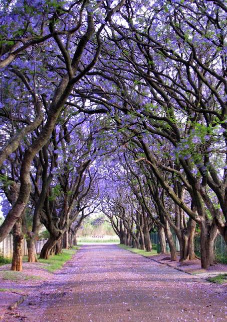 كولينان ,جنوب أفريقيا Cullinan, South Africa
