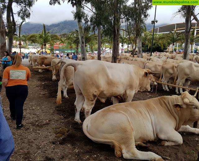 Cerca de 400 cabezas de ganado participaron en la Feria Ganadera de Los Llanos