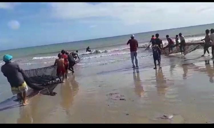 Resultado de imagem para tubarão é capturado no maranhão
