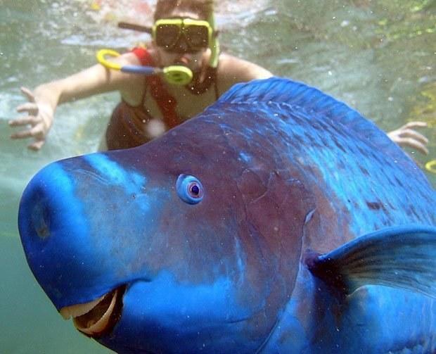 peixe feliz