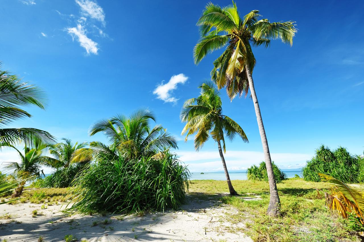Playa de palmeras para adultos