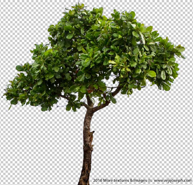 PNG Tree 00002