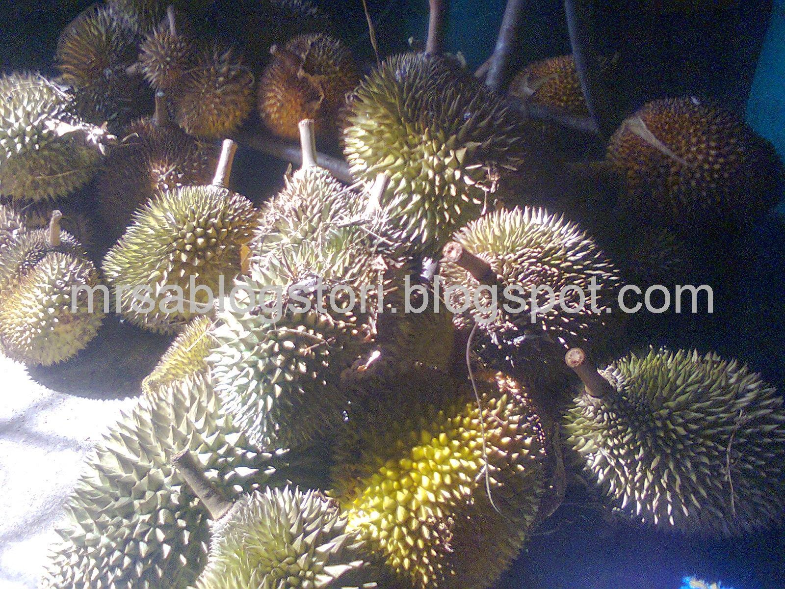 durian-kg-myhometown