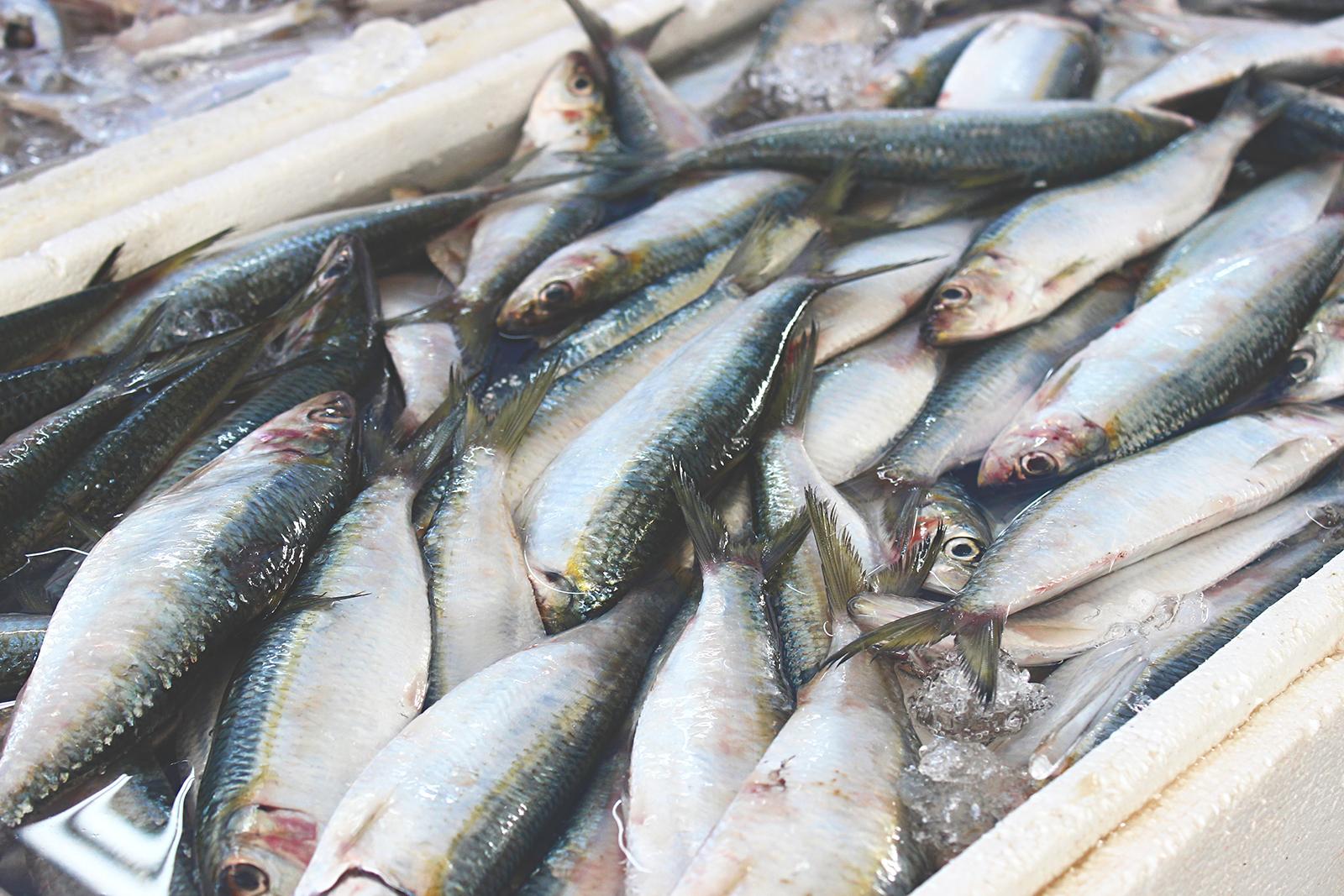 sardinhas peixaria santos