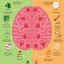Descripción de las funciones de los hemisferios del cerebro