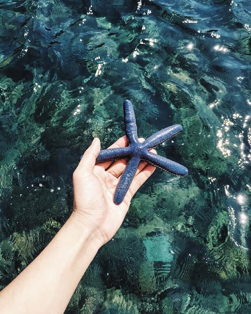 Kingdom of coral lies beneath Vinh Hy Bay 2