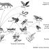 Penjelasan Aliran Energi dan Daur Biogeokimia
