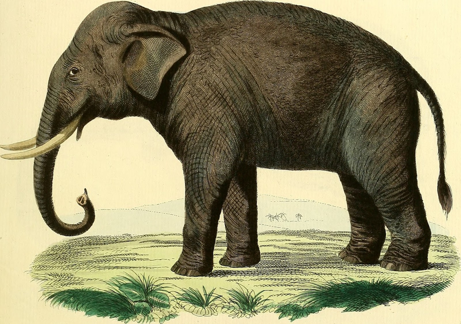 Data deluge how to fit an elephant 1953 how to fit an elephant 1953 biocorpaavc Image collections