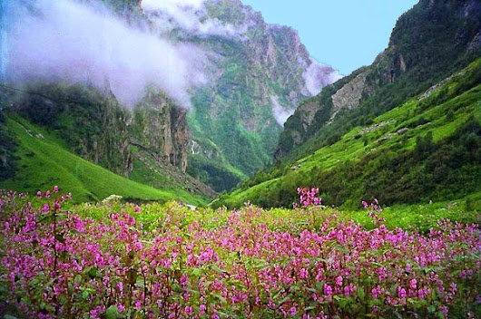 The Unparalleled Beauty & Diversity of Flora in Nanda Devi National Park