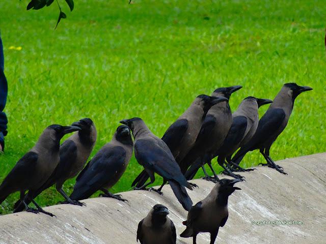 Victoria Memorial Garden, Kolkata