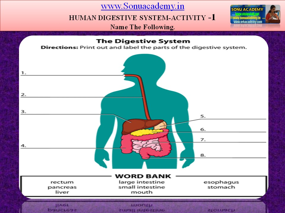 Sonu Academy Human Digestive System Activities