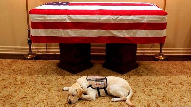 وفاة جورج بوش الاب وكلبتة تشارك في الجنازة وترقد بجوار التابوت (2)