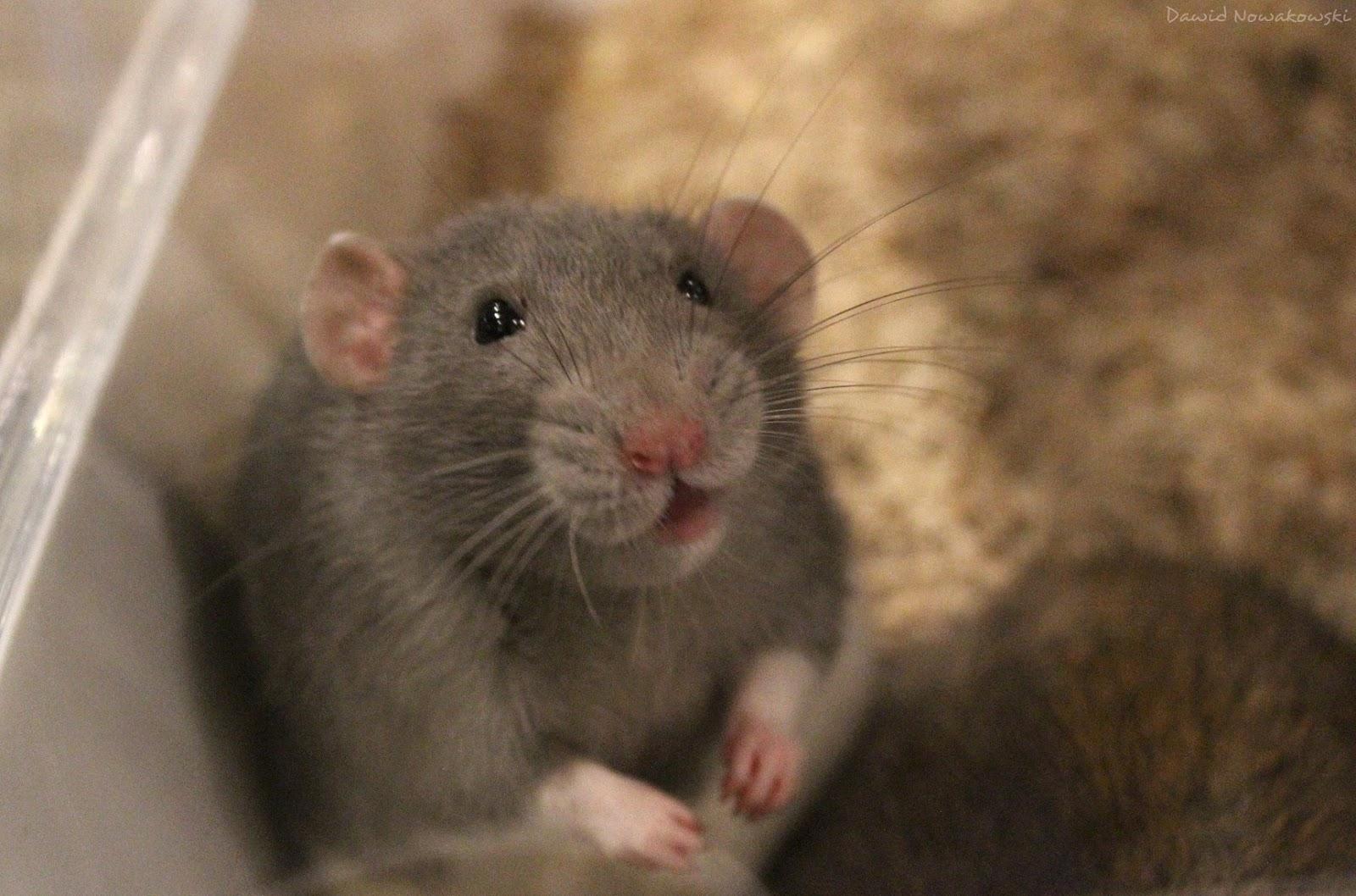 Odczarować Szczury II - relacja z imprezy