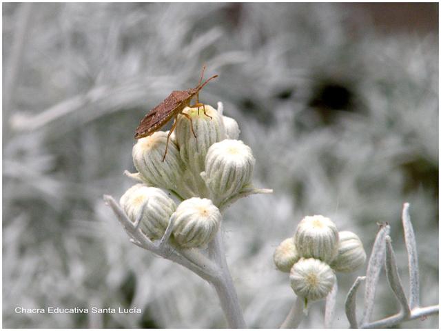 Seis patas y dos antenas - Chacra Educativa Santa Lucía