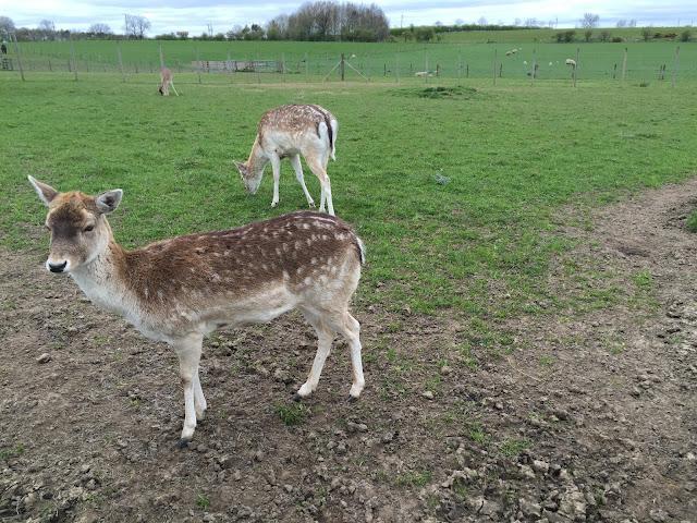 Deer Whitehouse Farm Morpeth Northumberland