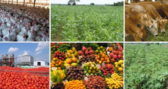 Image result for agriculture in south west nigeria