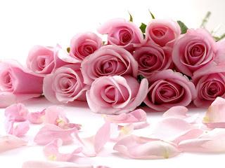 Resultado de imagem para rosas rosas