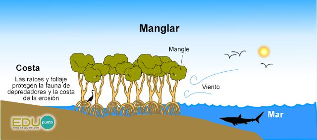 costas,edupunto,sistema,costero,playa,manglar,estuario,arrecife,pradera,mar,oceano,marina