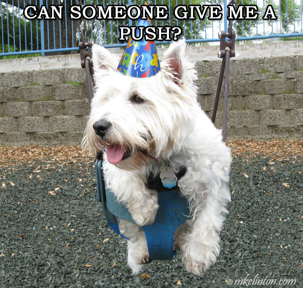 "Pierre Westie in a swing ""Can someone give me a push?"" meme"