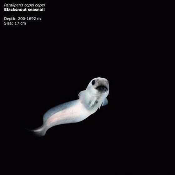 Misteri Dan Hidupan Laut Yang Wujud di Dalam Jurang Mariana