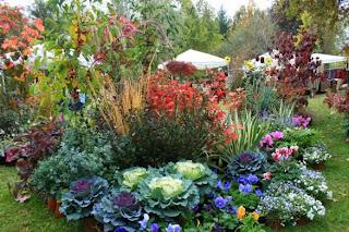 Foglie utili consigli per un giardino in fiore tutto l anno for Perenni da giardino