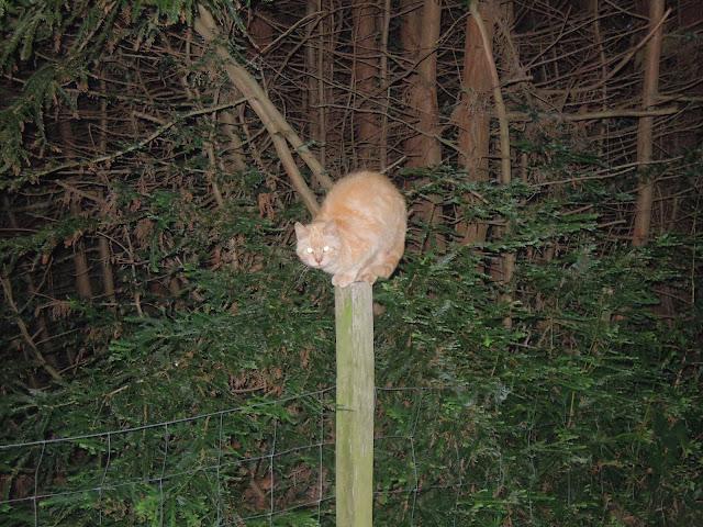 cat in france