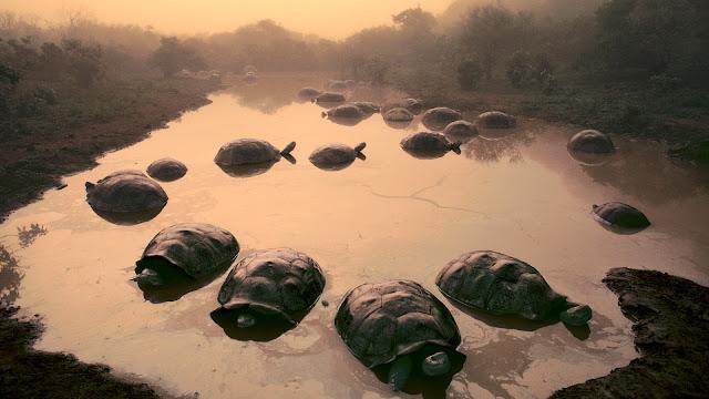Tortoise Images HD