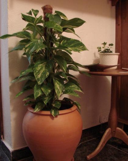 Vanderlei paisagista plantas e vasos para interiores for Plantas decorativas hidroponicas
