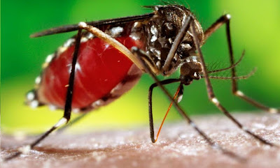 File: Home Remedies for Dengue Great Tips.svg