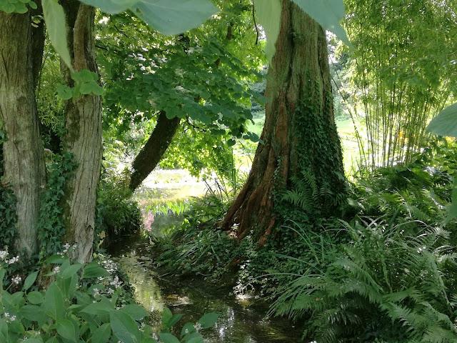 ogród wodny, ogród cienisty