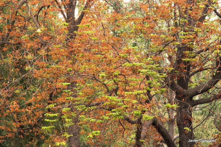 El Parque del Retiro se cubre de Otoño. Retiro Park is covered with Autumn