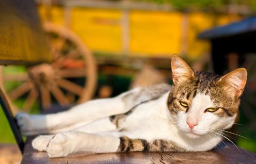 Amputacja pazurów u kotów – barbarzyństwo!