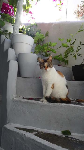 the cats of island paros