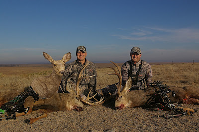 mule deer buck double using heads up decoy