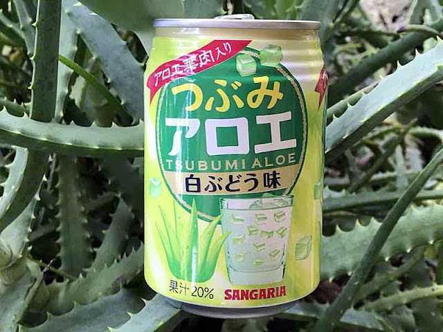 Can of aloe juice in Japan resting on aloe plant