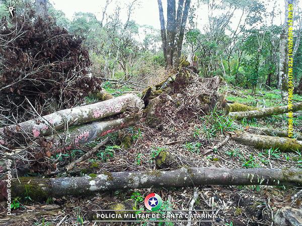 Crime ambiental no interior do município de Irineópolis