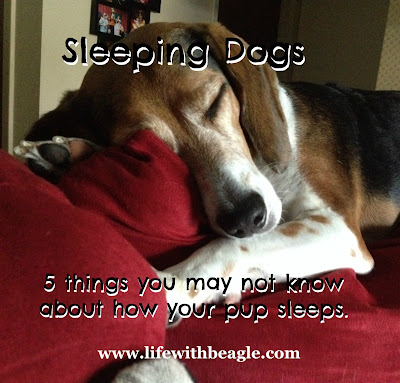 sleeping dogs and a giveaway