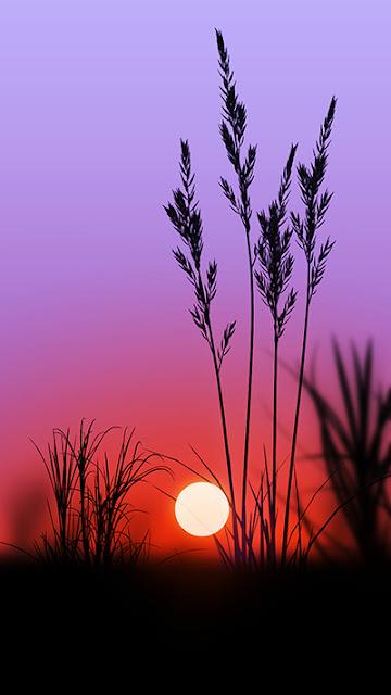 Sunset Wallpaper Galaxy A9 Pro