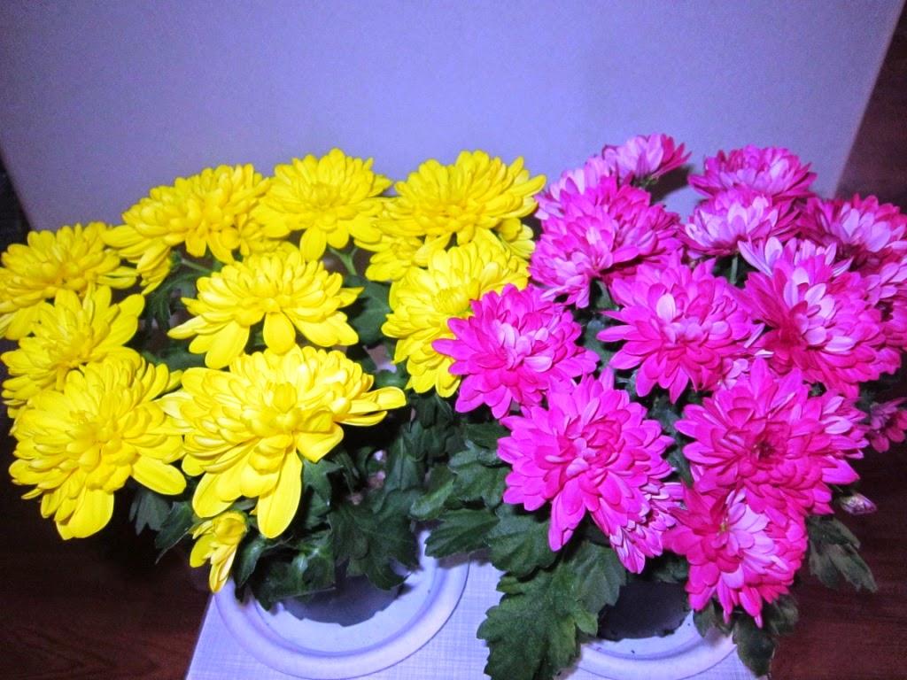 Курьер цветов в волгограде
