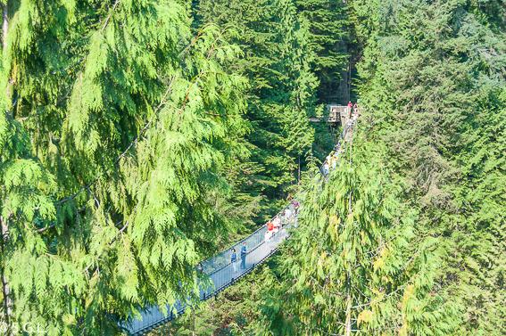 Visitando Vancouver. Puente colgante de Capilano