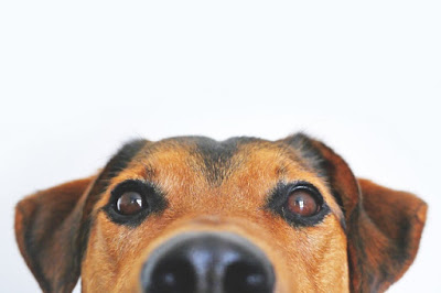 Dog Eyes look