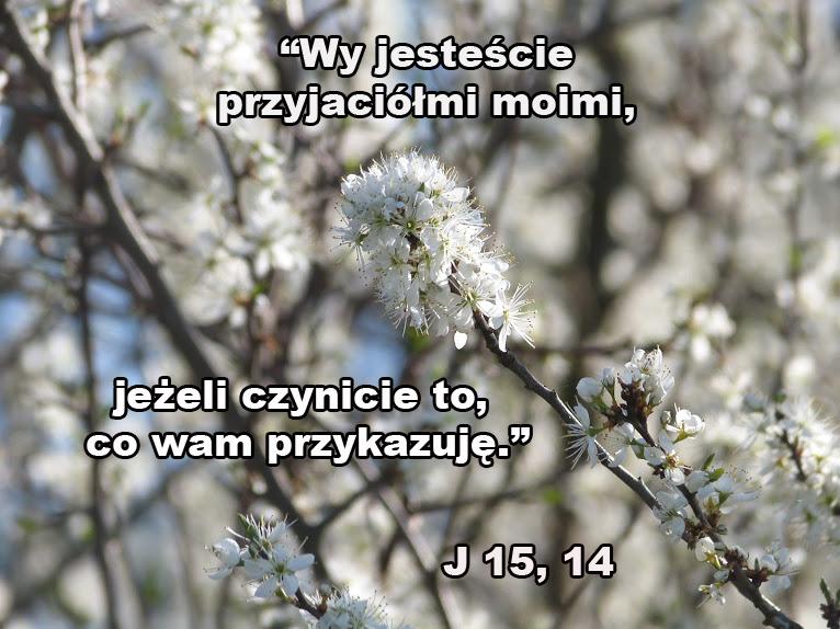 Znalezione obrazy dla zapytania pzyj do jezusa