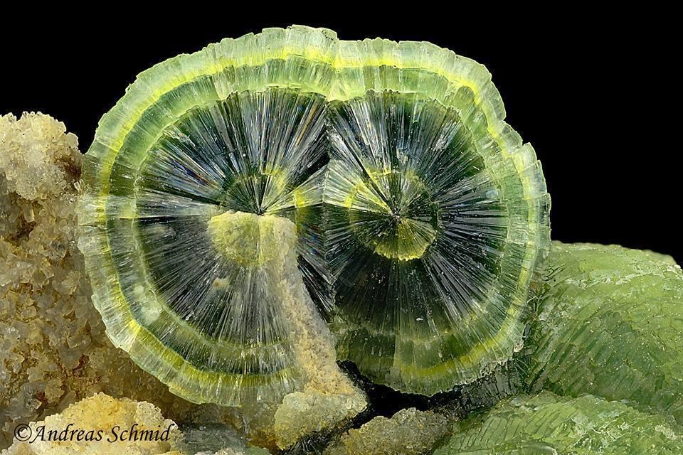 Green Radial Wavellite From Arkansas