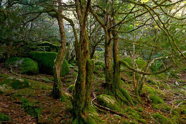Resultado de imagen de bosque de tejedelo