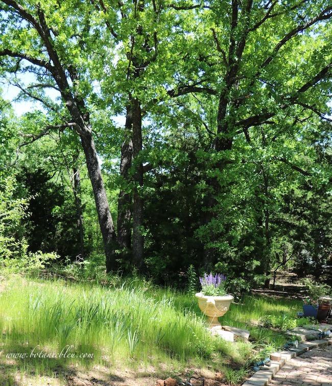 East spring meadow on hillside beneath oak trees