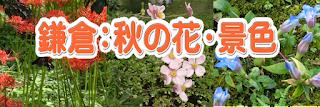 鎌倉:秋の花・景色