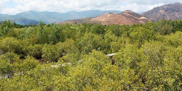 Memberdayakan Mangrove Bontang Jadi Pusat Wisata