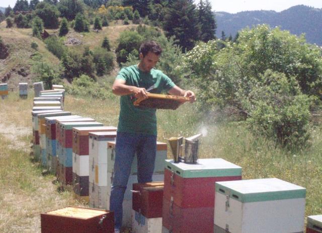 Δίπλα μου έχω παλιό μελισσοκόμο με τριώροφα μελίσσια: Γιατί τα δικά μου δεν μεγαλώνουν έτσι; Πως πιάνω καλή θέση μελισσοκομείου;