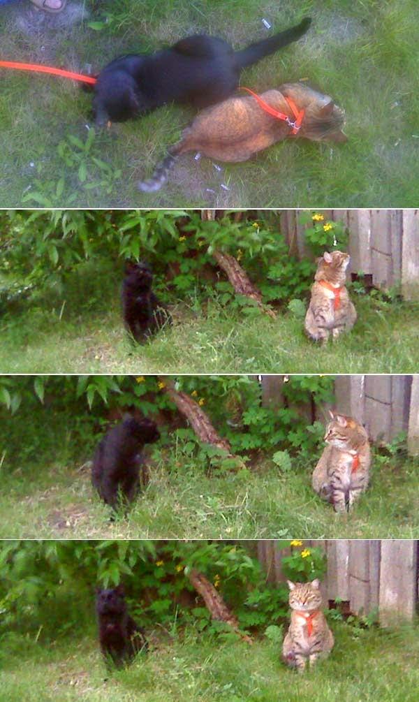дружба кошек