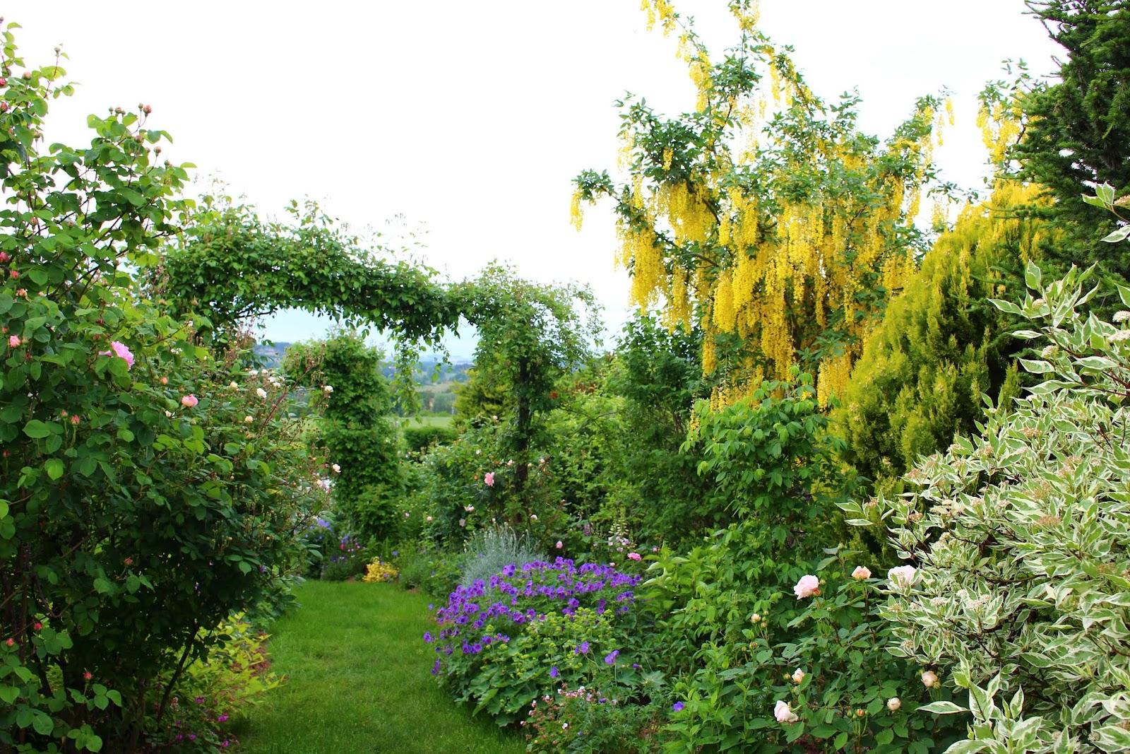 Roses du jardin ch neland g ranium sabani blue - Jardin de chen ...